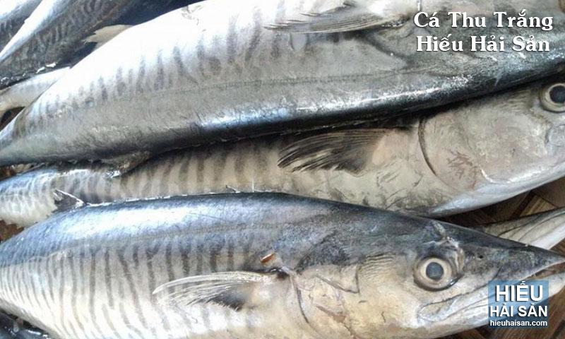 Cá Thu Trắng