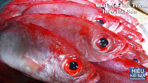 Cá Thóc - Bã Trầu
