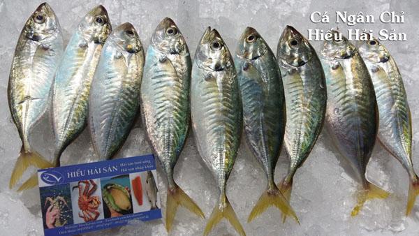 Cá Ngân Chỉ