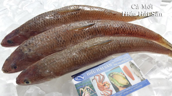 Cá Mối - Cá Chuối