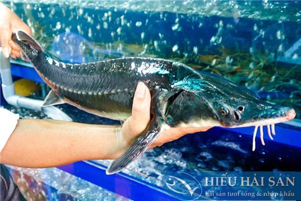 Cá Tầm