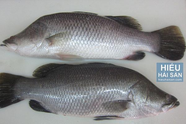 Cá Chẽm
