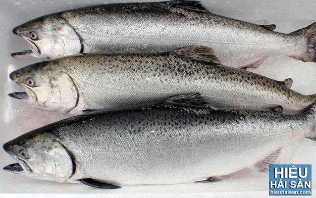Cá hồi Nauy nguyên con