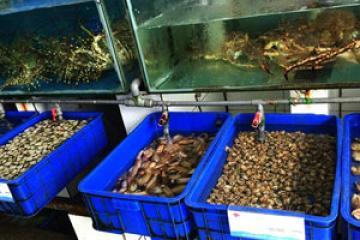 Tại sao Hiếu kinh doanh hải sản