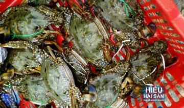 Loài cua biển nào đắc giá nhất Thế Giới